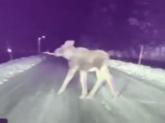 Tesla Model S a evitat coliziunea cu un elan pe un drum înghețat